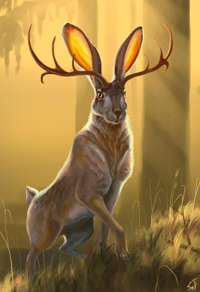 Jackalope, The Rabbit With Horns/Antlers - Are Jackalopes Real?